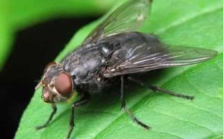 Убить муху во сне — значение сна. К чему снятся мухи во сне женщине