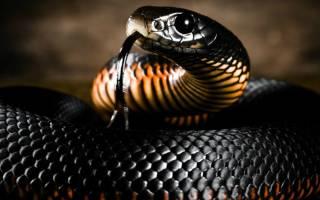 К чему снится змея по соннику. К чему снятся змеи