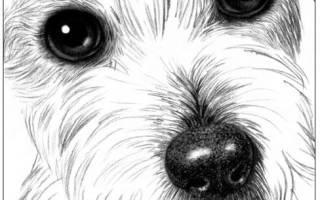 Как нарисовать белую шерсть. Как рисовать шерсть животных карандашом