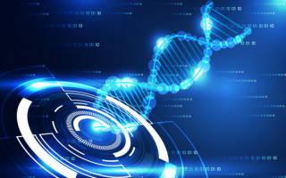 Генетические алгоритмы: суть, описание, примеры, применение.