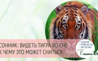 К чему снится тигр кусает. К чему снится тигр