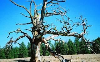 Видеть во сне засохшее дерево. Что значит во сне Дерево