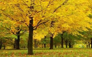 К чему снится большое дерево с листьями. К чему снится дерево во сне