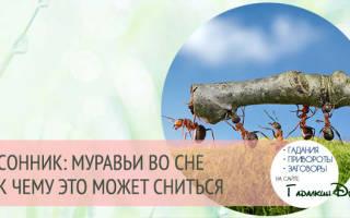 К чему снятся муравьи на траве. Сонник — к чему снятся муравьи