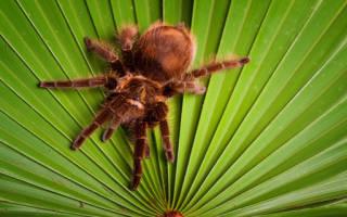 К чему снится паук коричневый. Сонник современной женщины