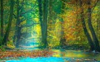 К чему снится выживание в лесу. Тёмный лес