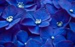 Значение синего цвета в психологии. Психология цвета: синий