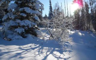 Куда можно съездить на алтае зимой. Отдых зимой