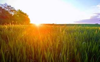 «Солнечный удар», анализ рассказа Бунина. Солнечный удар бунин