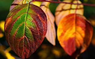 К чему снится сухие листья на земле. К чему снятся листья на дереве