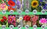 Какой цветок соответствует знаку зодиака. Выбираем цветы по знакам зодиака