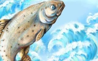Рыба женщине. К чему снится рыба женщине? Сонник про рыбу