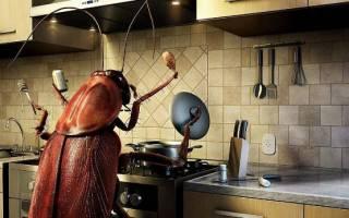 К чему снятся убитые тараканы. Снятся тараканы в волосах