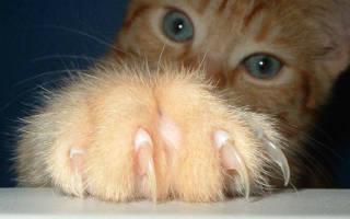 К чему снится кот царапает руки. К чему снится поцарапала кошка до крови