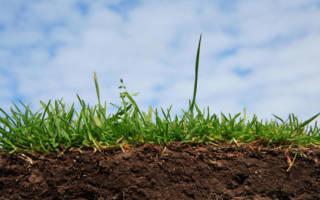 К чему снится покупка земли. Разберемся, что означает рыхлая и черная земля