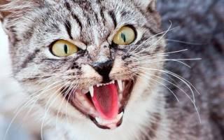 Кошка нападает толкование сонника.
