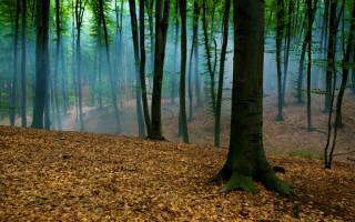 К чему снится красивый лес для женщин. Зеленый лес по соннику
