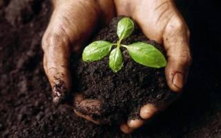 Что такое загрязнение почвы. Загрязнение человеком почвы и его последствия