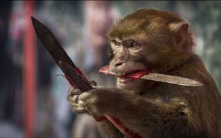Приснилась маленькая обезьяна: сонник. Сонник: к чему снится обезьяна