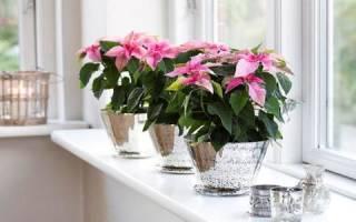 Растения по фэншую. Цветы по фен-шуй в доме: как правильно выбрать