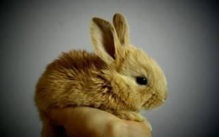 Сонник: кролики — к чему снятся. Сонник кролики маленькие