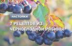Рецепт настойки из черноплодной рябины на водке. Настойка из черной рябины