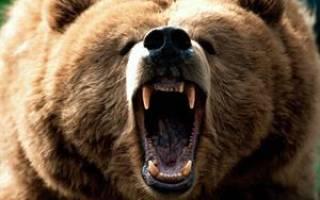 К чему снится убить медведя ножом женщине. Что говорит сонник Цветкова
