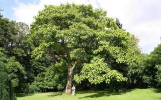 Что значит когда снится дерево. Еврейский сонник Что означает Дерево во сне