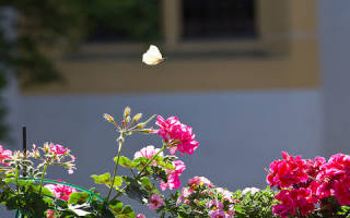 К чему снится бабочка. Разноцветные бабочки по соннику