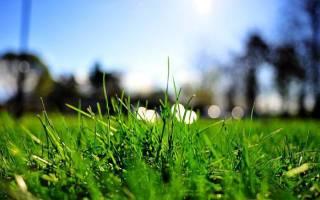 Сон трава зеленая сочная. Толкование сна зеленая трава в сонниках