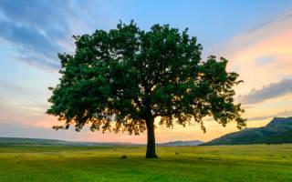 Сон дерево качается. К чему снится дерево