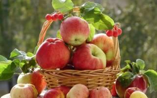 Рецепт приготовления пюре из яблок. Пюре из яблок: рецепты
