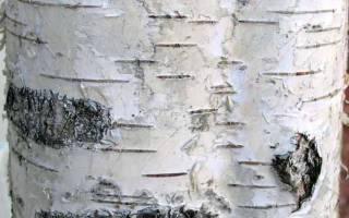Первая грамота. Новгородские берестяные грамоты