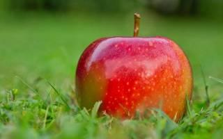Анализ рассказа «Антоновские яблоки» И.А. Бунин Бунин и