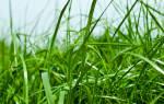 Трава: к чему снится сон. К чему снится зеленая трава