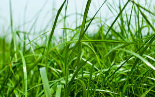 К чему снится зеленая трава. К чему снится сухая трава