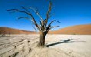 К чему снится огромное дерево. К чему снится сухое дерево