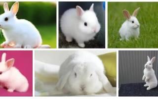 Кролики во сне женщины — значение сновидения. Белый кролик по соннику