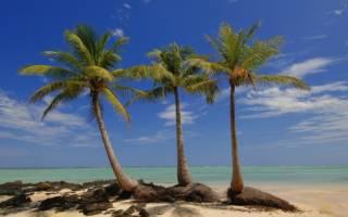Три пальмы. Михаил лермонтов – три пальмы