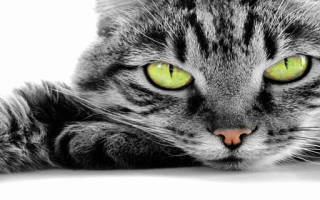 Голодные кошки и коты. Сонник Евгения Цветкова