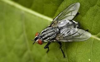 К чему снится много мух. Убить муху во сне — значение сна