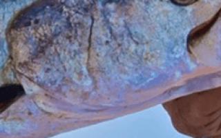 Поймать рыбу во сне мужчине удочкой. Словить во сне большую рыбу на удочку
