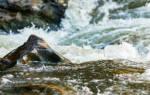 Сон бурлящая река одна впадает в другую. Сонник: к чему снится река