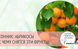 Абрикосы по соннику. К чему снится абрикос