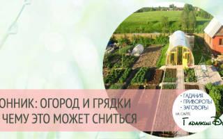 К чему снится огород с урожаем. К чему снится огород по Ванге