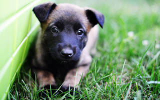Что означает когда снится щенок. К чему снится щенок
