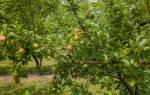 Сонник деревья зеленые красивые. Сонник: деревья к чему снятся