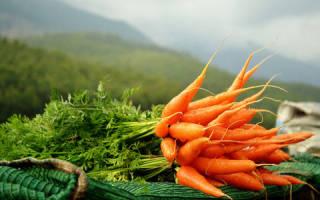 К чему снится копать морковь с грядки. Сонник: морковь — к чему снится